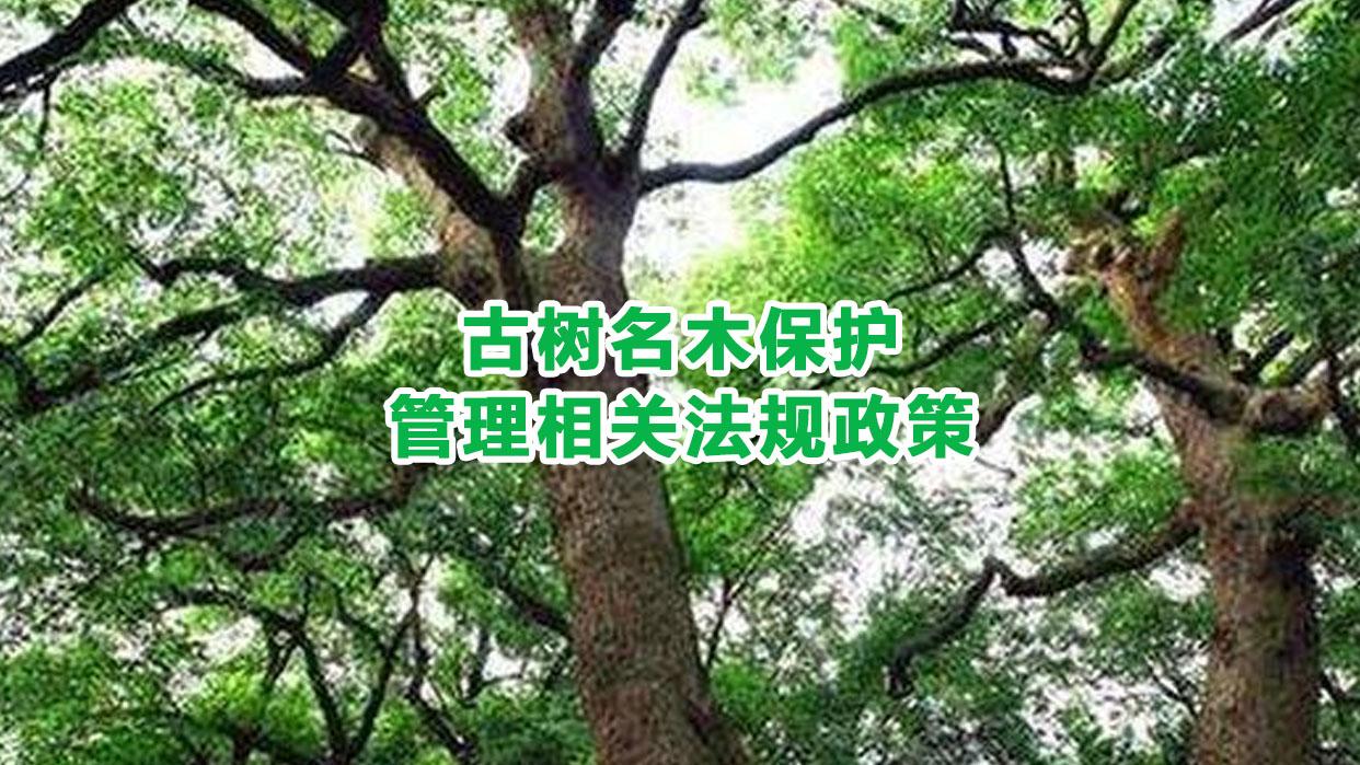 古树名木保护管理相关法规政策
