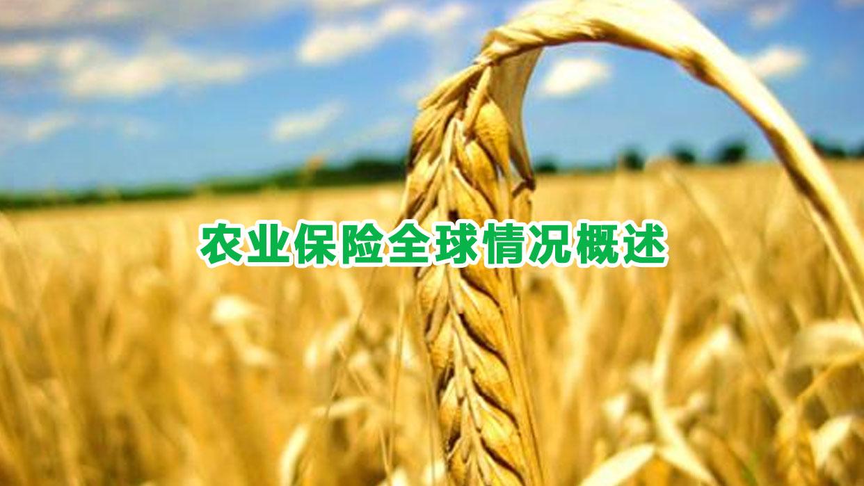 农业保险全球情况概述
