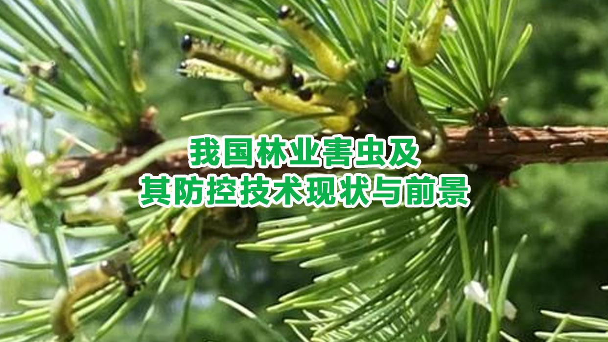 我国林业害虫及其防控技术现状与前景