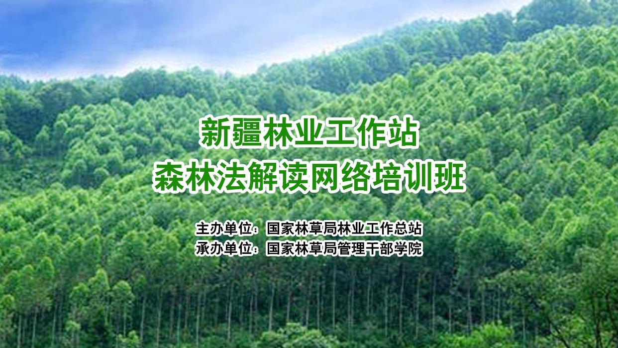 新疆林业工作站森林法解读网络培训班